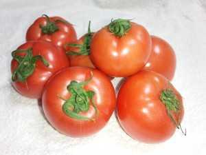 やなぎいトマト
