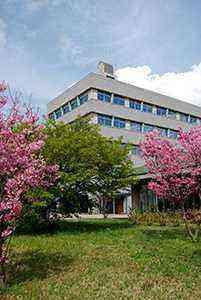 桜と市役所