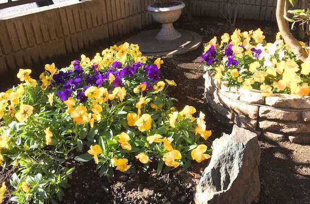 M邸のお花が太陽に眩しく