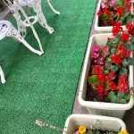 花いっぱい運動の時に植えたお花です。