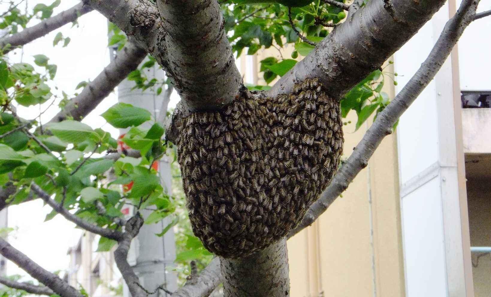 ミツバチの画像 p1_24