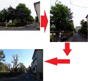 大沼第5公園 木の剪定 (2014/7~10)