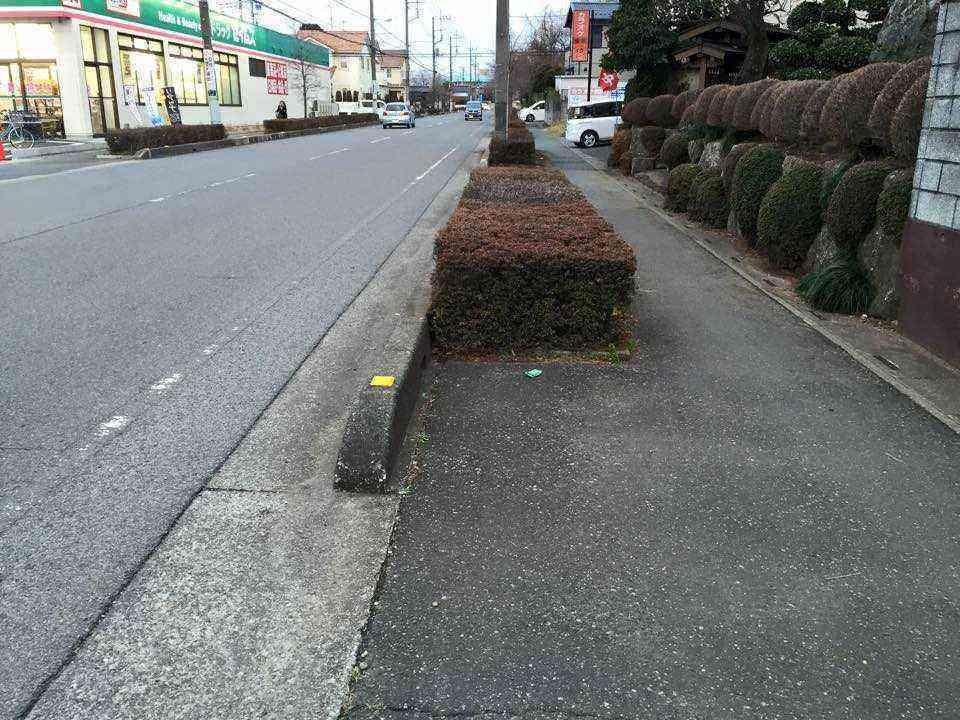 のくぼ通り植栽1