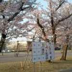 桜花爛漫の選挙掲示板!