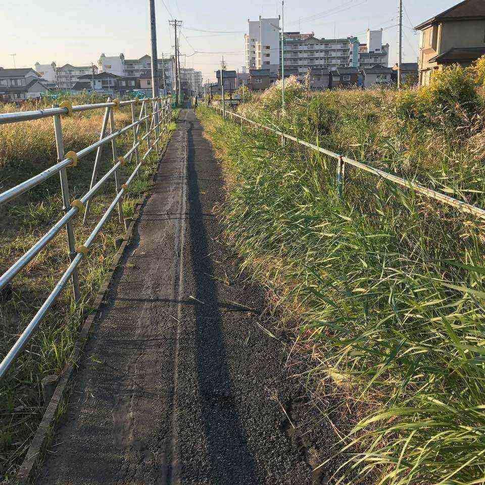 宮田用水沿いの草1