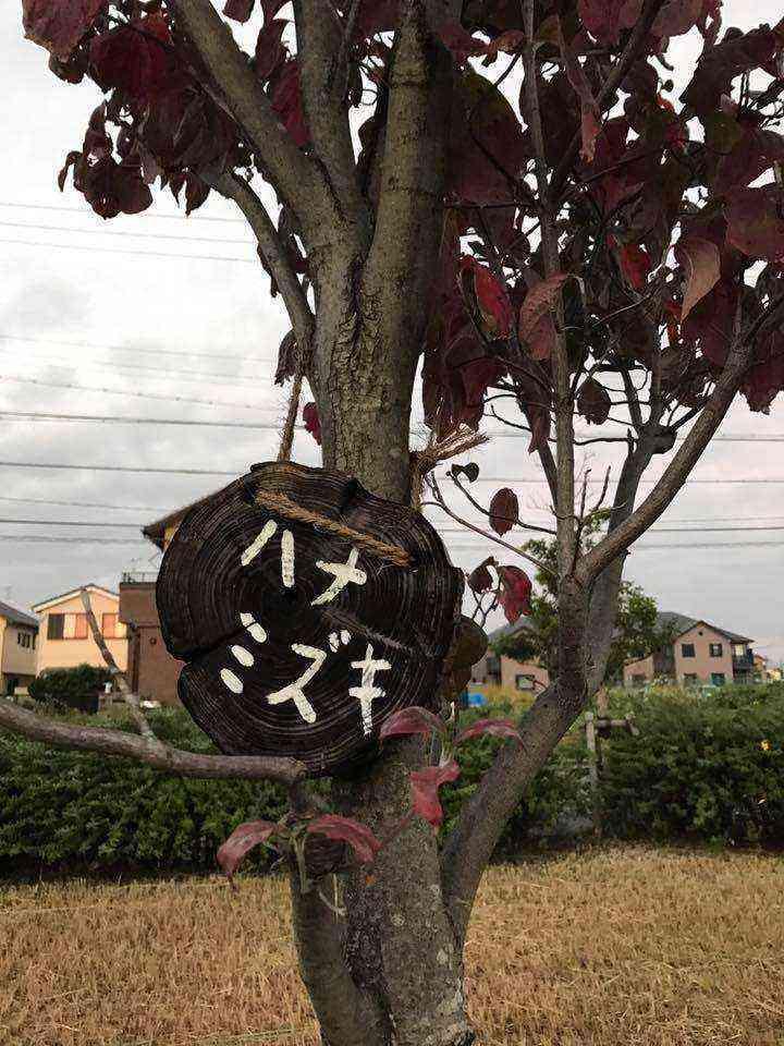 富田公園の木の名札2