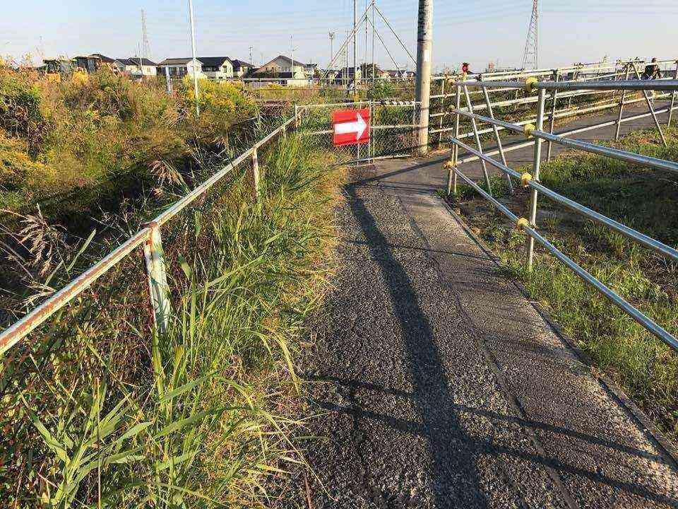 宮田用水沿いの草3