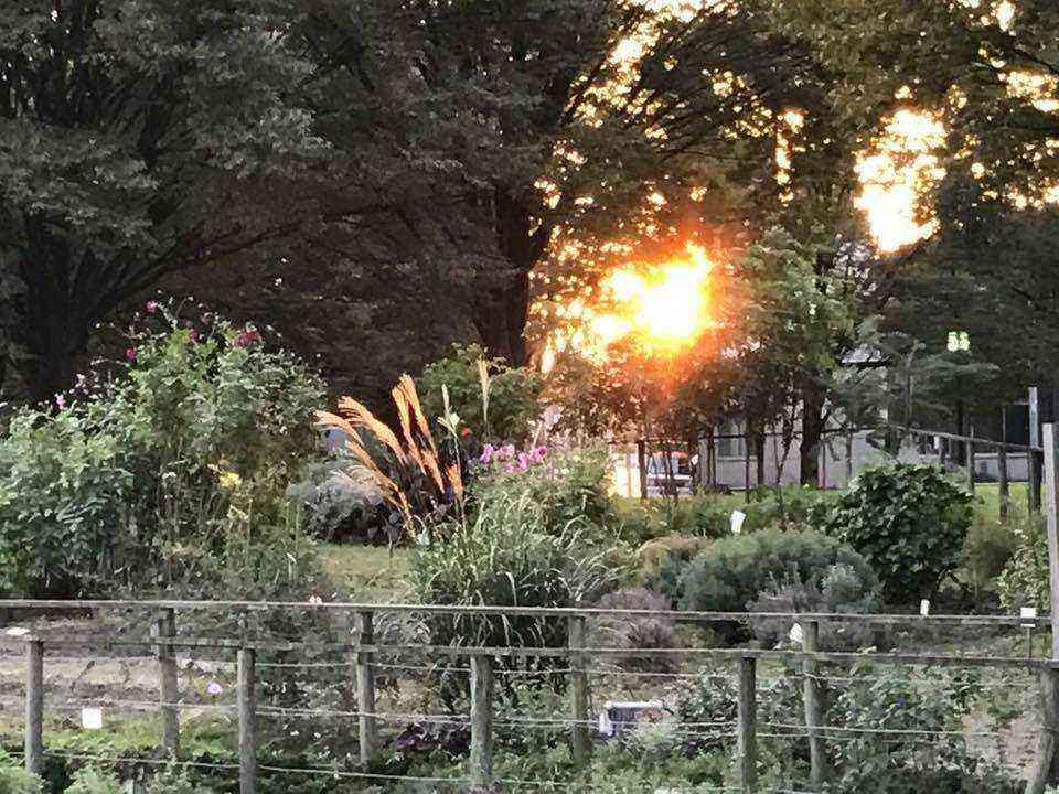 富田公園の木の名札4