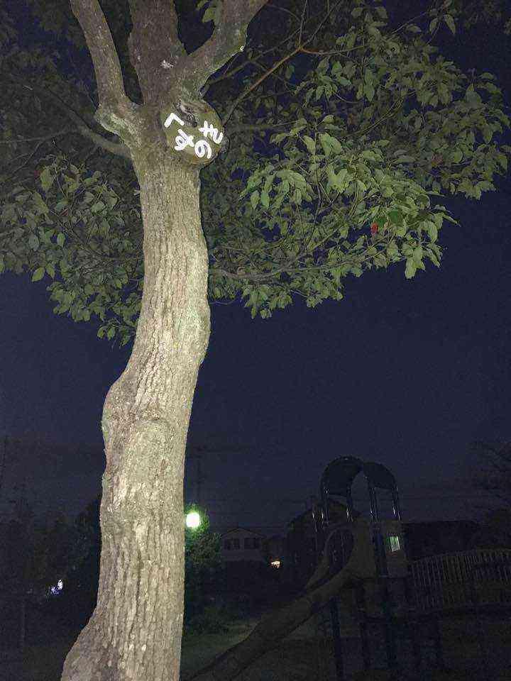 富田公園の木の名札クスノキ