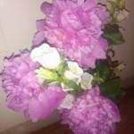 20150529花
