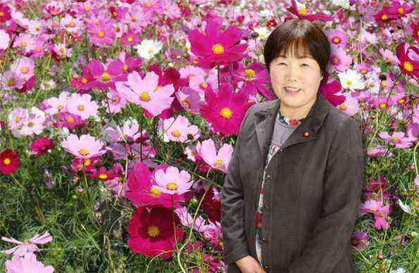 小美玉市の花、コスモスです
