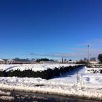 160118積雪3