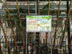 業平小外壁緑化 (1)