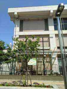 業平小外壁緑化 (2)