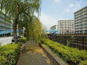浅草通り街路樹 (1)