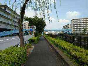 浅草通り街路樹 (2)