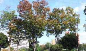 2014-10-25_134015.jpg