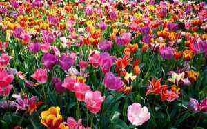 spring-272016.4