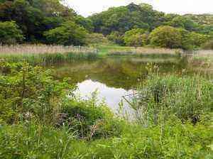 池が見えてきました。名前があればいいのに。