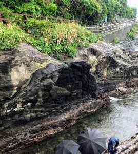 観光橋付近で見られる化石化したカンザシゴカイ科群衆