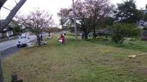 DSC_0197扇山自治会境川河川敷草刈り202010 (6)