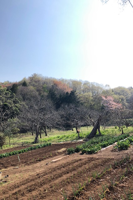 高 尾山 コロナ