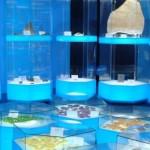 2階展示室は太古の海、バーチャル水族館も!