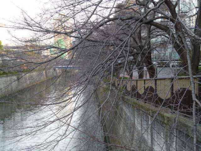 氾濫 目 黒川
