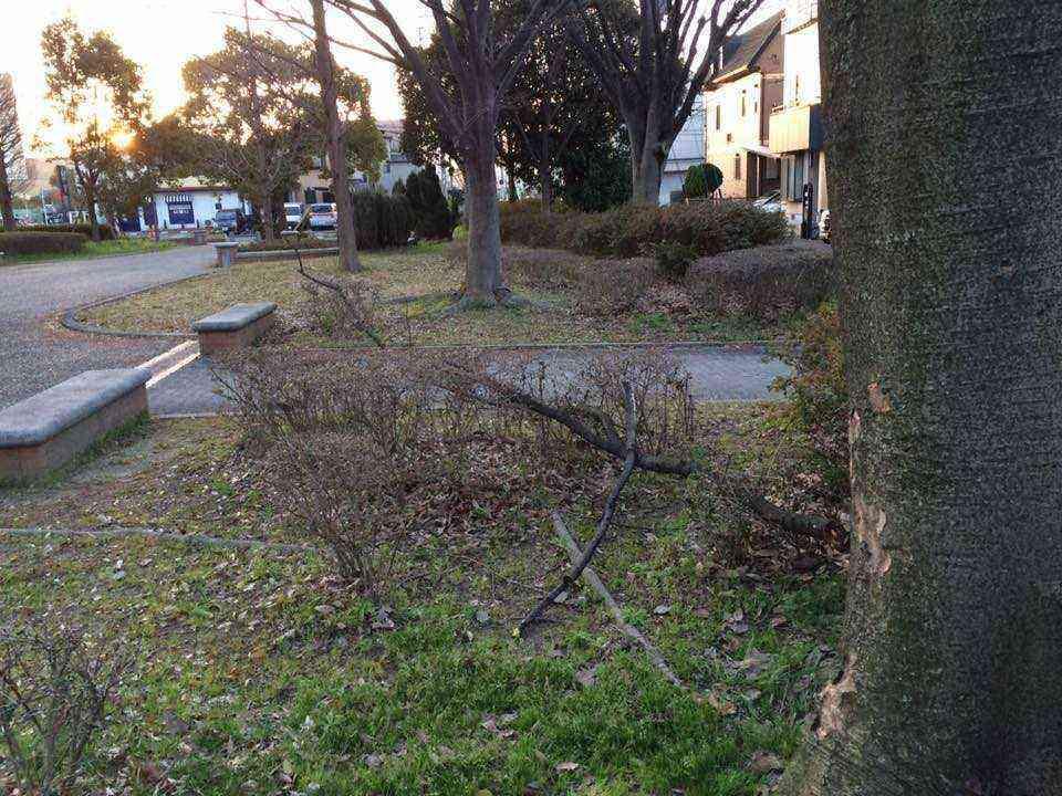 富田公園の落下した枝