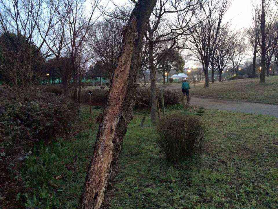 富田公園の樹木腐った