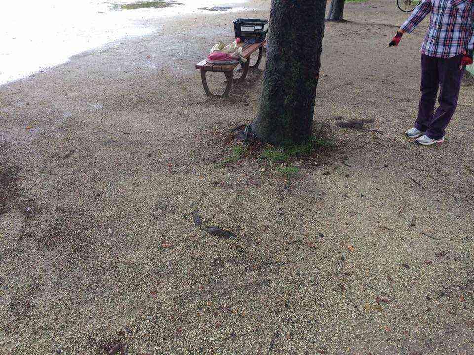 富田公園の根上