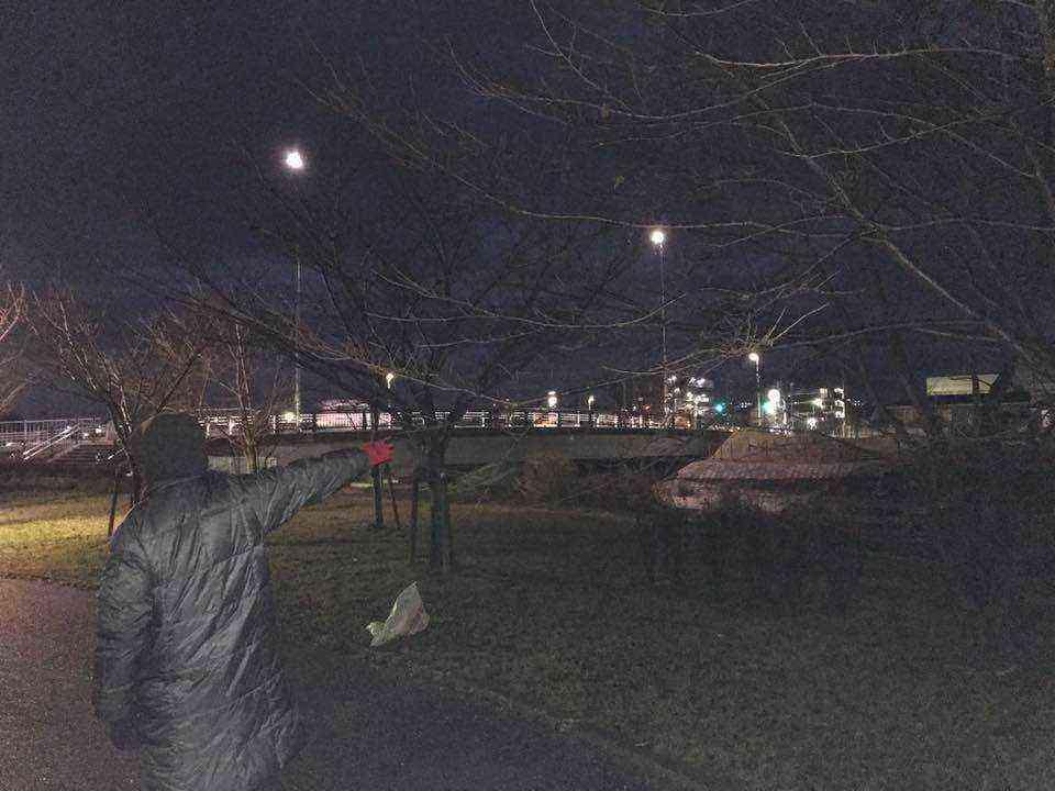富田公園の桜の枝が危険です1
