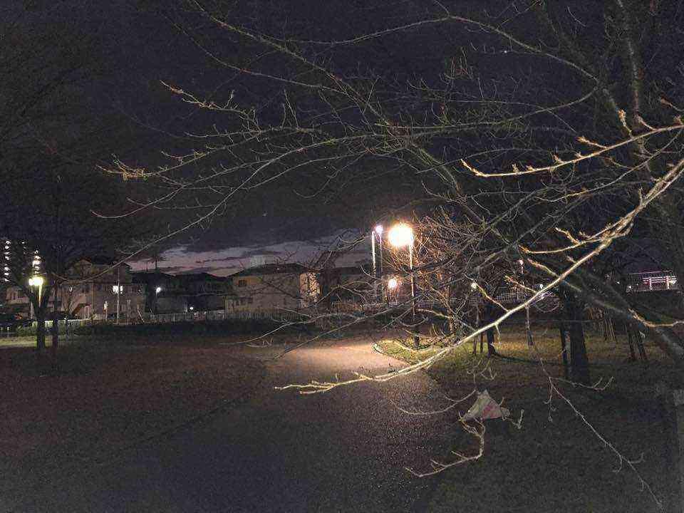 富田公園の桜の枝が危険です2