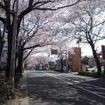 20150330桜