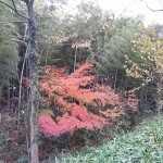 20161126紅葉