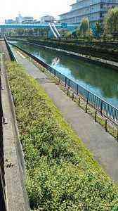 北十間川遊歩道 (2)