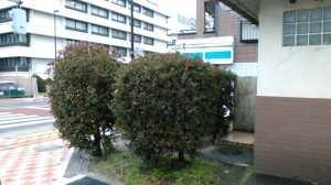 福神橋際公衆トイレ (4)