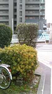 福神橋際公衆トイレ (3)