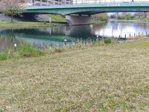 旧中川水辺公園野鳥 (2)