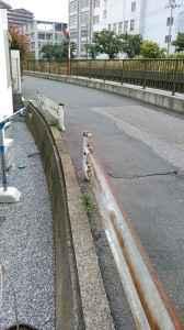 立花1丁目ガードレール (2)