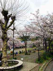 アザリエ公演桜