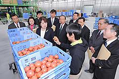 トマト栽培の大規模ハウスを視察する伊藤さんら=26日 兵庫・加西市