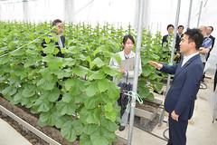県立農林大学校のビニールハウスを視察する矢倉政務官=13日 静岡・磐田市