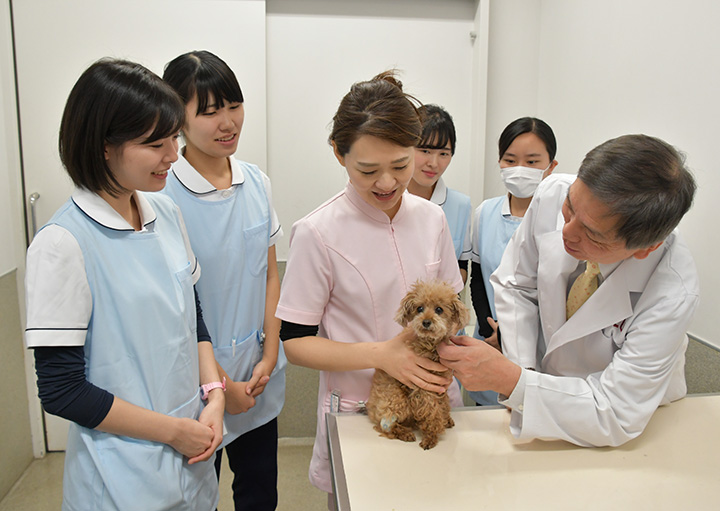 資格 動物 看護 師