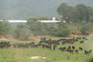 警戒区域内の牧場
