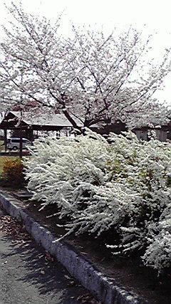 20080401.jpg